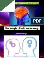 Mofologia-ukadu-nerwowego