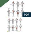 Ejercicios y músculos que trabajan