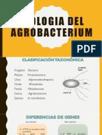 Exposicion Biologia Del Agrobacterium t..Pptx