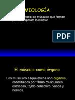 Anato 002 (miologia)