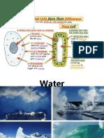 Properties of Water.ppt