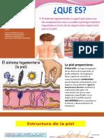 Sistema Tegumentario Anatomia