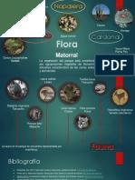 Flora y Fauna PNC Mapa Mental