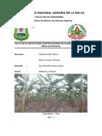 Falta de Plantaciones Certificadoras de Hijuelos