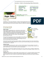 How to Grow Sugar Baby Watermelon _ Guide to Growing Sugar Baby Watermelon