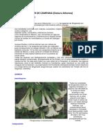 Investigacion 4_flor de Campana Datos
