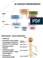 Uk.nerwowy - Funkcje