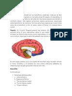 Guía Nervioso (blanco FVET)