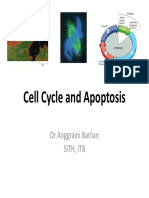 Cell Cycle and Apoptosis