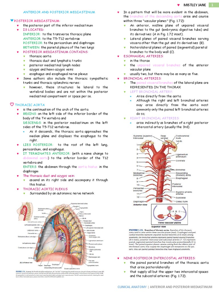 Enchanting Anatomy Of Intercostal Space Images - Human Anatomy ...