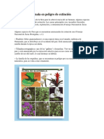 Flora y  fauna de Guatemala en peligro de extinción.docx