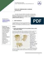 embriologc3ada-humana.pdf