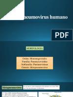 Metapneumovirus-Bocavirus- G5