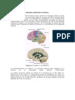 Biologia Cerebral