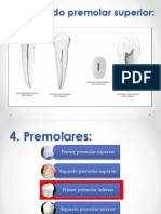 Parte 2 ...Sistema Dentario