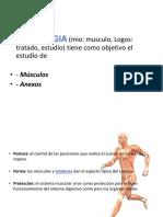 Sistema Muscular 2
