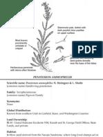 Penstemon ammophilus ~ Utah Rare Plants