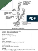 Penstemon gibbensii ~ Utah Rare Plants