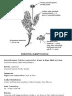 Podistera eastwoodiae ~ Utah Rare Plants
