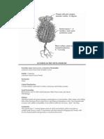 Sclerocactus wetlandicus ~ Utah Rare Plants