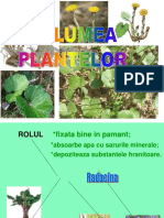 In Lumea Plant El Or
