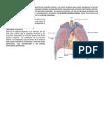 Diccionario Médico ing-esp  822ce75b9e18