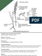 Spiranthes diluvialis ~ Utah Rare Plants