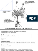 Thelesperma pubescens var. pubescens ~ Utah Rare Plants