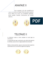 Anafase y Telofase 2