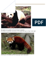 Disertacion Osos Panda