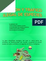 Invasion y Trafico Ilegal de Especies