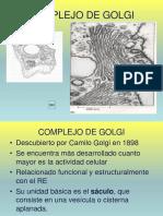 17M Golgi