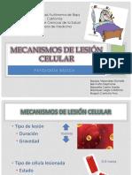 mecanismosdelesioncelular bvbvbv