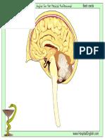 organsystems_flash.pdf