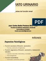 Urianalisis.pptx
