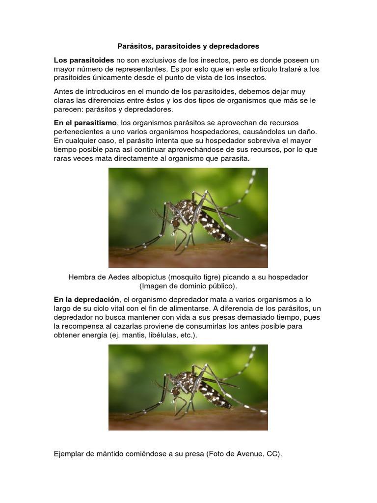 diferencia entre parasito y depredador