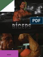 Biceps.pdf