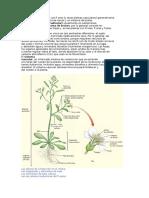 El Cuerpo de Las Plantas Con Fl Ores