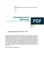 Somatosensory Pathways