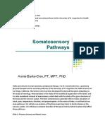 Somatosensory Pathways