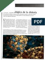 Base neurológica de la dislexia.pdf