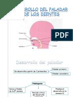 expo embrio - paladar y dientes.pptx