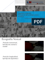 Diagnostico EcograFico Próstata y Vejiga