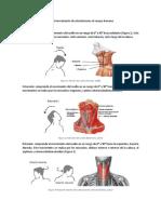 Músculos Relacionaos Con El Movimiento de Articulaciones El Cuerpo Humano