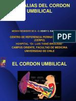 Cordon Umbilical