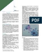 BOLETIN1-06.pdf