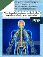 Plexobraquial y Lumbosacro y Sus Patoogias