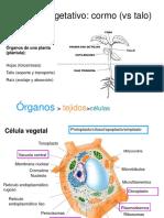 Clases 1 y 2.Célula vegetal.pps