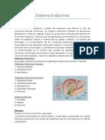 Práctica 3 Endocrino
