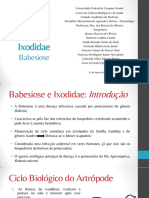 Babesiose Seminário - Parasitologia